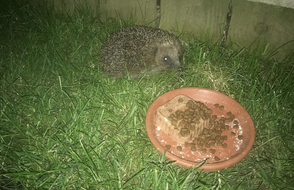 Hedgehog Highway a Hit