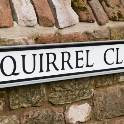 Squirrel Close