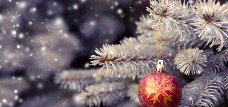 Real or fake – the great Christmas tree debate - Russell Armer Homes