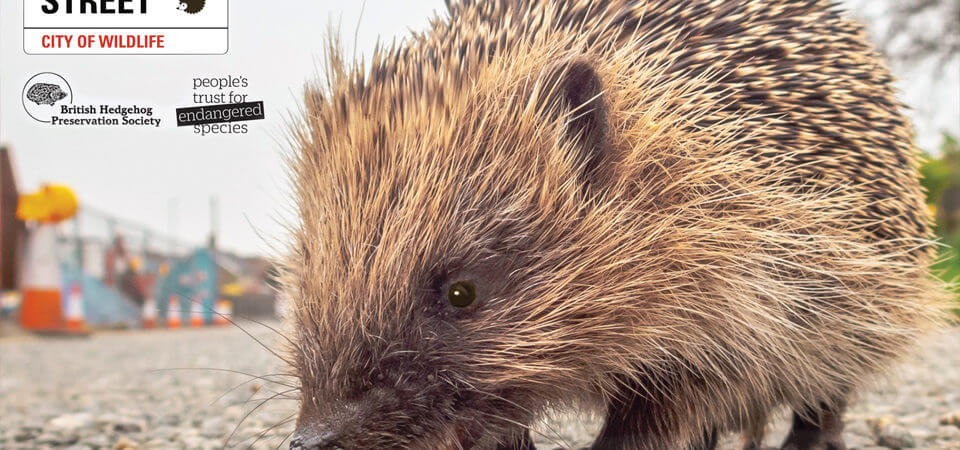 Russell Armer supports hedgehog charity by consulting on new developers' guide
