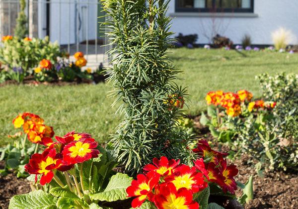 Oakfield-garden